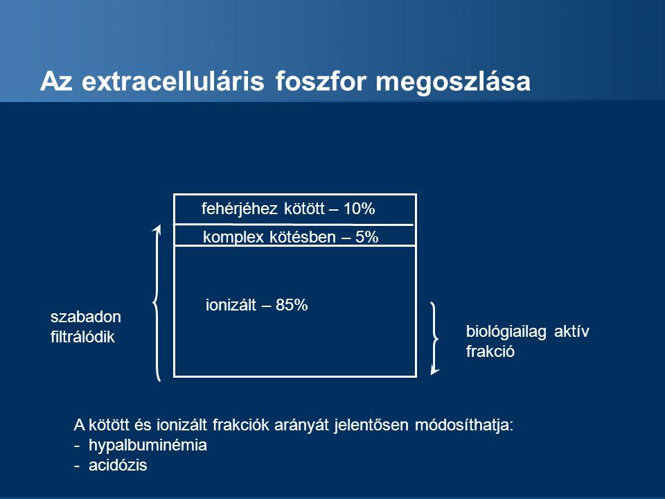 Az extracelluláris foszfor megoszlása fehérjéhez kötött – 10% komplex kötésben – 5% ionizált – 85% biológiailag aktív frakció szabadon filtrálódik A k