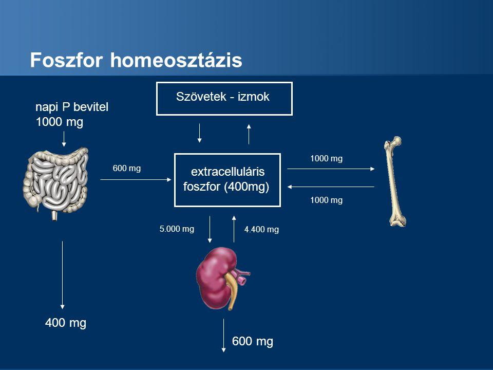 Foszfor homeosztázis extracelluláris foszfor (400mg) napi P bevitel 1000 mg 400 mg 600 mg 4.400 mg 5.000 mg 1000 mg PTH Szövetek - izmok D vitamin