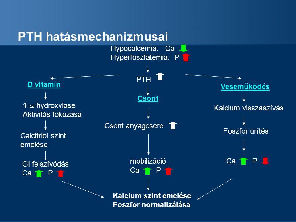 PTH hatásmechanizmusai Hypocalcemia: Ca Hyperfoszfatemia: P PTH Csont anyagcsere mobilizáció Ca P D vitamin Calcitriol szint emelése GI felszívódás Ca