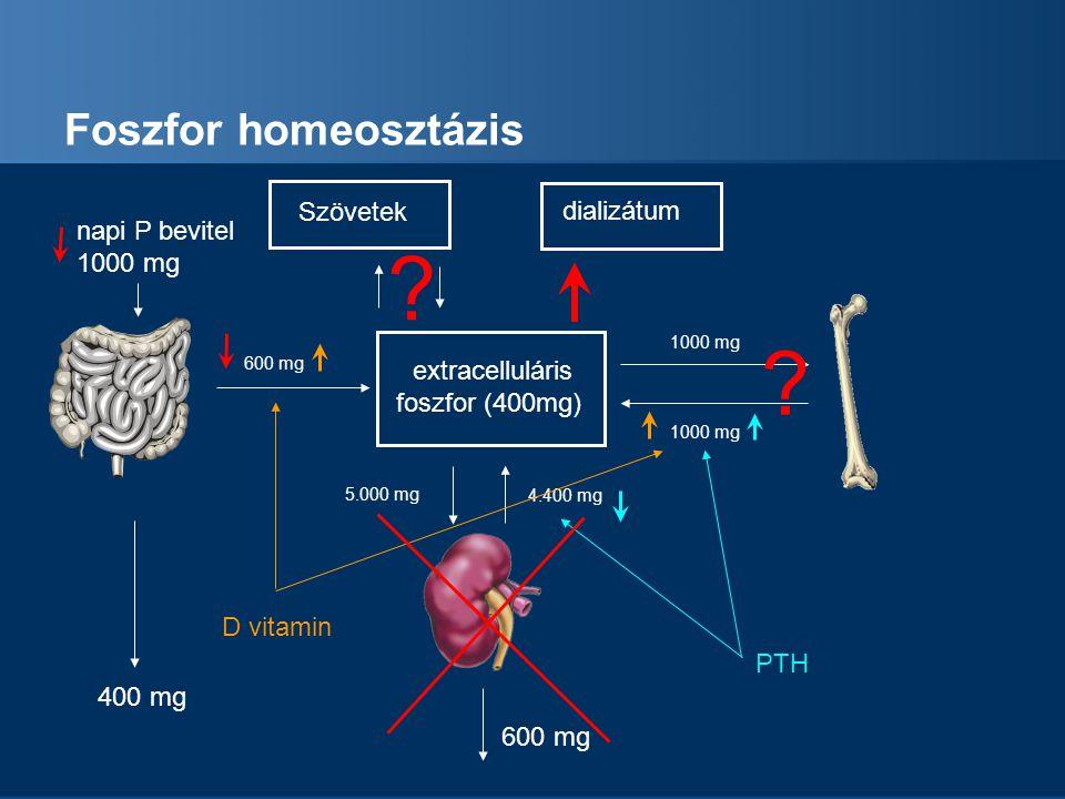 Kalcium homeosztázis ESRD-ben Hyperfoszfatemia: P PTH Csont anyagcsere mobilizáció Ca P D vitamin Calcitriol szint emelése GI felszívódás Ca P Kalcium visszaszívás Foszfor ürítés Kalcium szint emelése Foszfor normalizálása Csont 1-  -hydroxylase Aktivitás fokozása Veseműködés Ca P