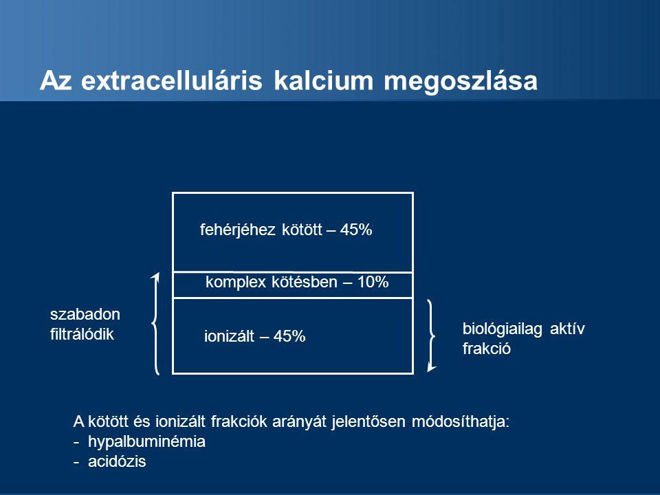 Az extracelluláris kalcium megoszlása fehérjéhez kötött – 45% komplex kötésben – 10% ionizált – 45% biológiailag aktív frakció szabadon filtrálódik A