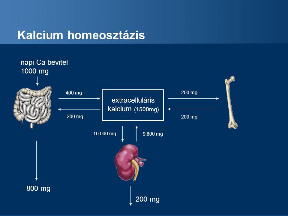 Kalcium homeosztázis extracelluláris kalcium (1500mg) napi Ca bevitel 1000 mg 800 mg 200 mg 400 mg 200 mg 9.800 mg 10.000 mg 200 mg