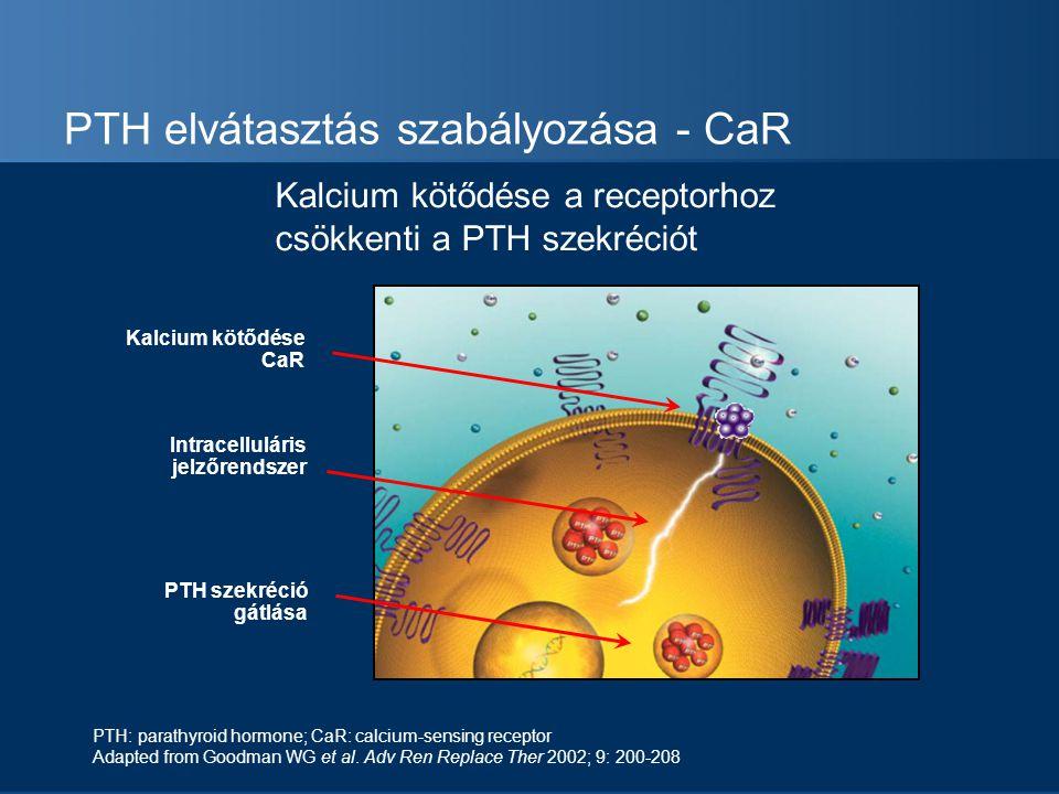 PTH elvátasztás szabályozása - CaR Intracelluláris jelzőrendszer PTH szekréció gátlása Kalcium kötődése CaR PTH: parathyroid hormone; CaR: calcium-sen