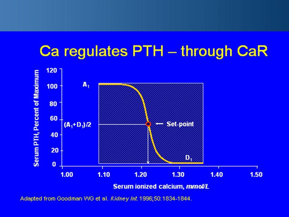 Parathormon (PTH) elválasztását fokozza –elsősorban az alacsony ionizált Ca –magas szérum foszfát szint elválasztást csökkenti –magas ionizált Ca –alacsony foszfor szint –aktív D vitamin