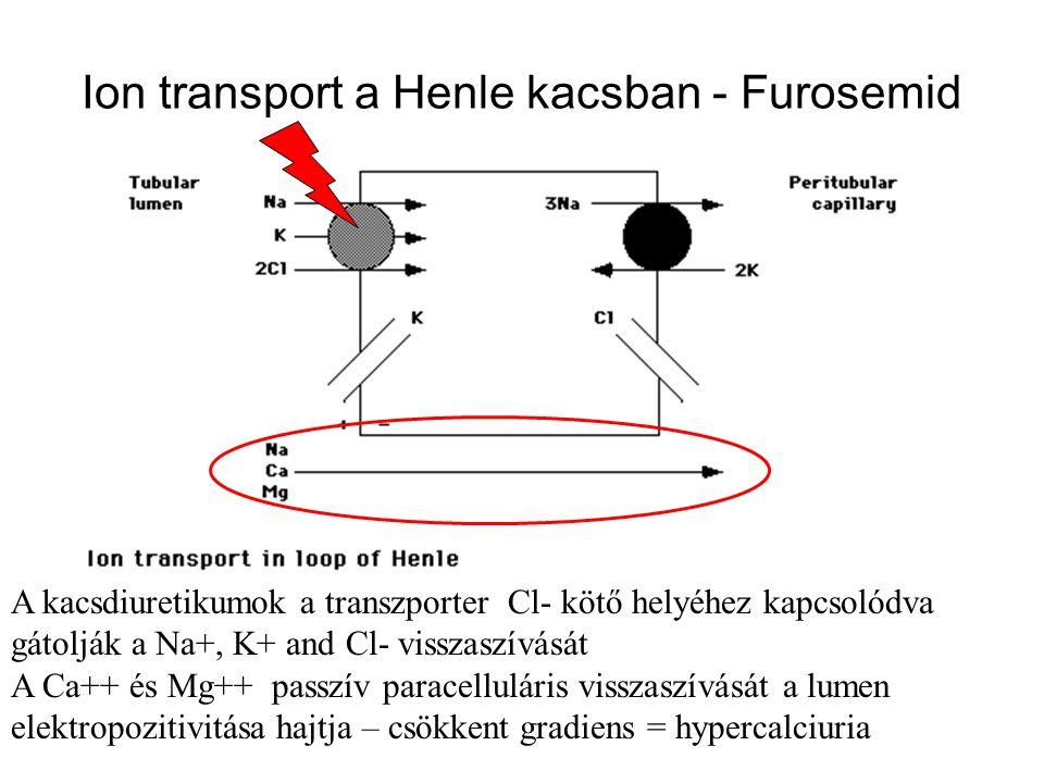 Ion transport a Henle kacsban - Furosemid A kacsdiuretikumok a transzporter Cl- kötő helyéhez kapcsolódva gátolják a Na+, K+ and Cl- visszaszívását A Ca++ és Mg++ passzív paracelluláris visszaszívását a lumen elektropozitivitása hajtja – csökkent gradiens = hypercalciuria