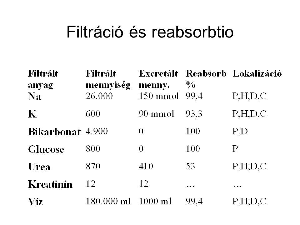 Filtráció és reabsorbtio