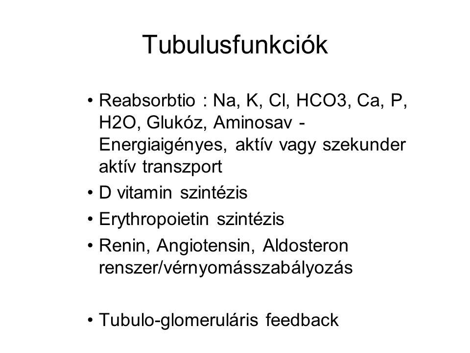 Tubulusfunkciók Reabsorbtio : Na, K, Cl, HCO3, Ca, P, H2O, Glukóz, Aminosav - Energiaigényes, aktív vagy szekunder aktív transzport D vitamin szintézis Erythropoietin szintézis Renin, Angiotensin, Aldosteron renszer/vérnyomásszabályozás Tubulo-glomeruláris feedback