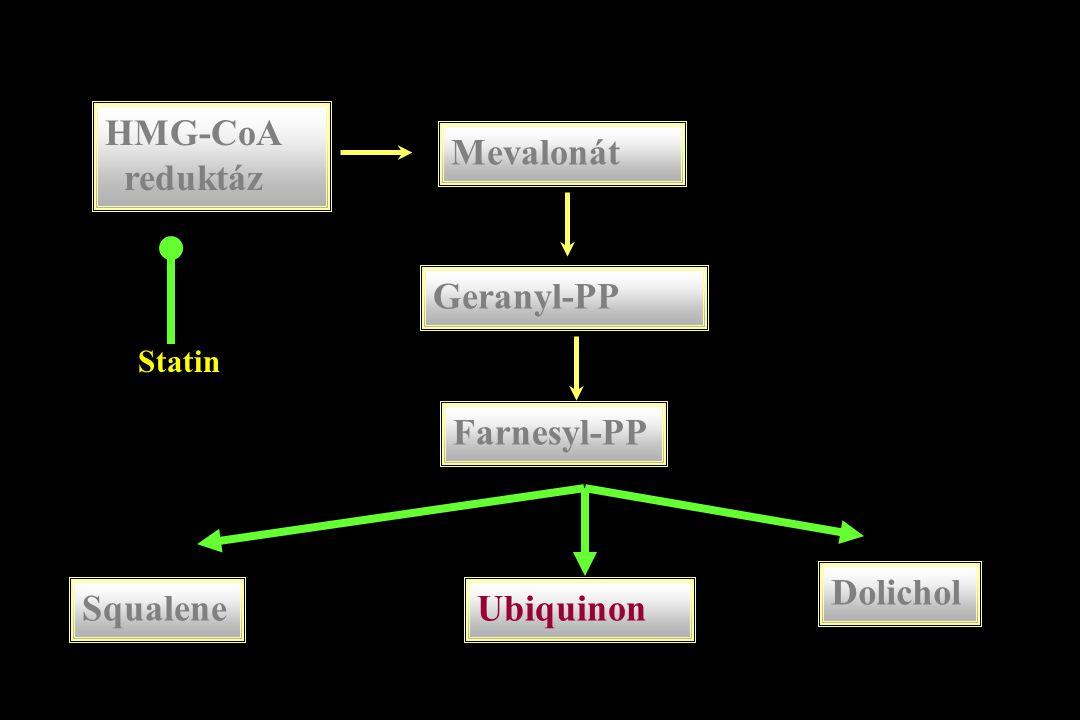 HMG-CoA reduktáz Mevalonát Geranyl-PP Farnesyl-PP SqualeneUbiquinon Dolichol Statin