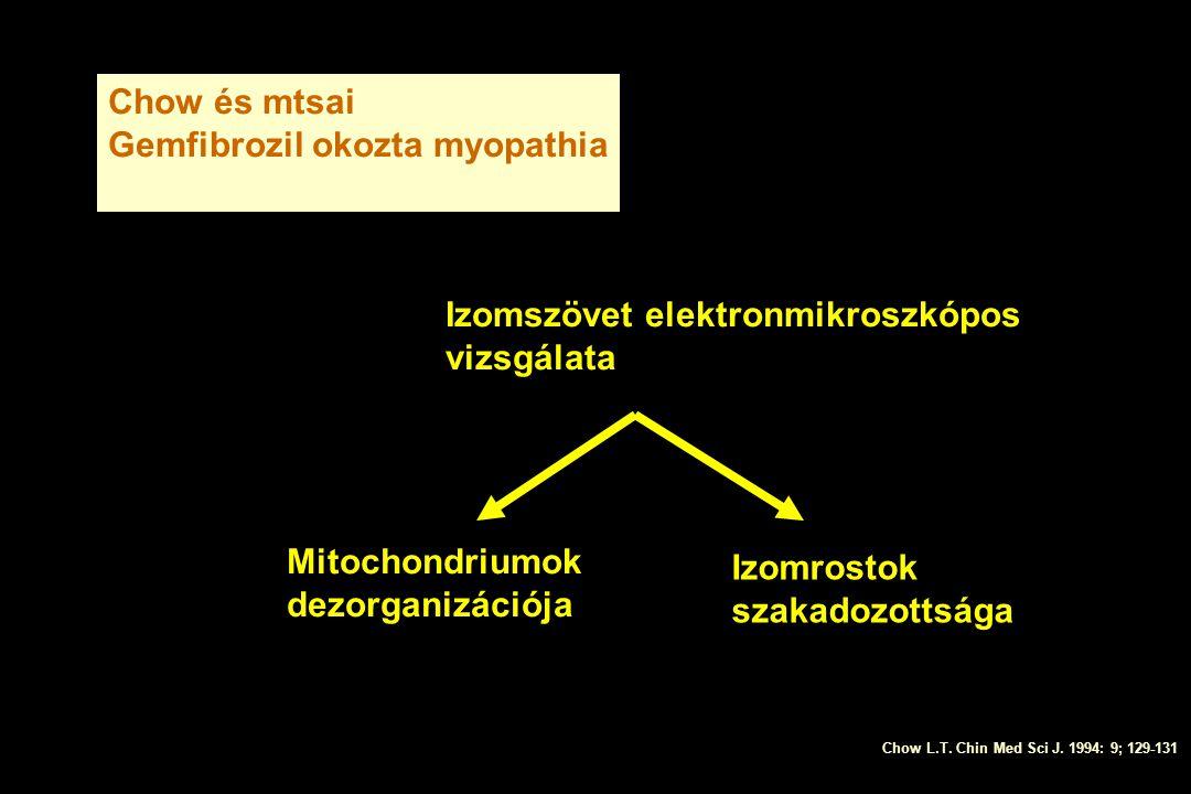 Chow és mtsai Gemfibrozil okozta myopathia Izomszövet elektronmikroszkópos vizsgálata Izomrostok szakadozottsága Mitochondriumok dezorganizációja Chow