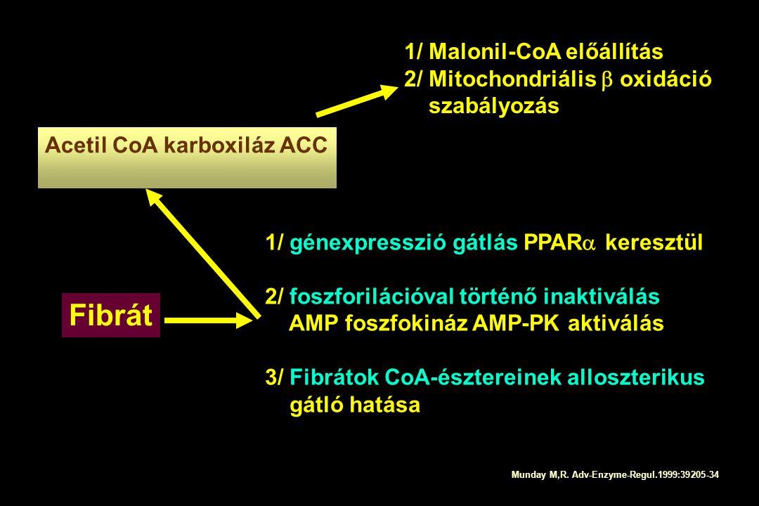 Acetil CoA karboxiláz ACC 1/ génexpresszió gátlás PPAR  keresztül 2/ foszforilációval történő inaktiválás AMP foszfokináz AMP-PK aktiválás 3/ Fibráto