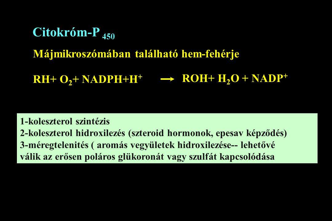Citokróm-P 450 Májmikroszómában található hem-fehérje RH+ O 2 + NADPH+H + ROH+ H 2 O + NADP + 1-koleszterol szintézis 2-koleszterol hidroxilezés (szte