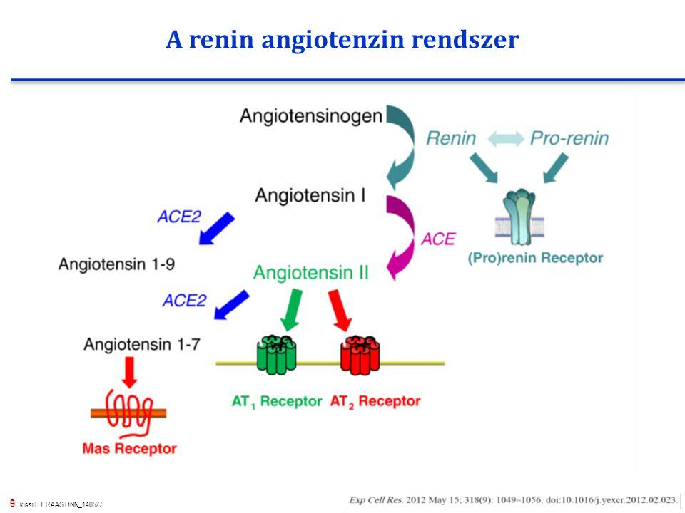 20 kissi HT RAAS DNN_140527 A RAAS rendszer és a működését gátló gyógyszerek hatáshelyei