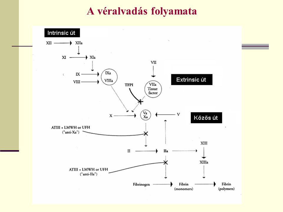 A véralvadás folyamata