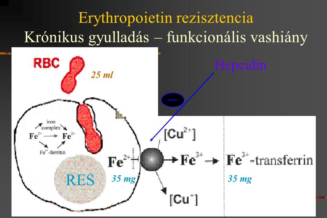 Ferroportin Fe-ATPase Ceruloplasmin 25 ml 35 mg Hepcidin Erythropoietin rezisztencia Krónikus gyulladás – funkcionális vashiány RES