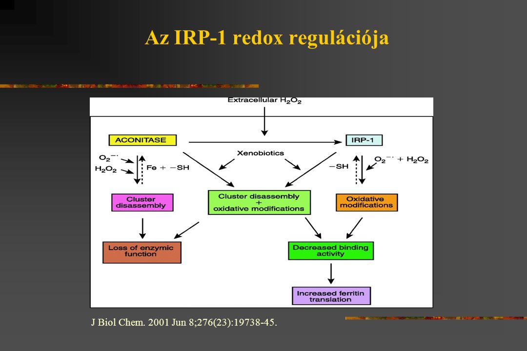 Az IRP-1 redox regulációja J Biol Chem. 2001 Jun 8;276(23):19738-45.