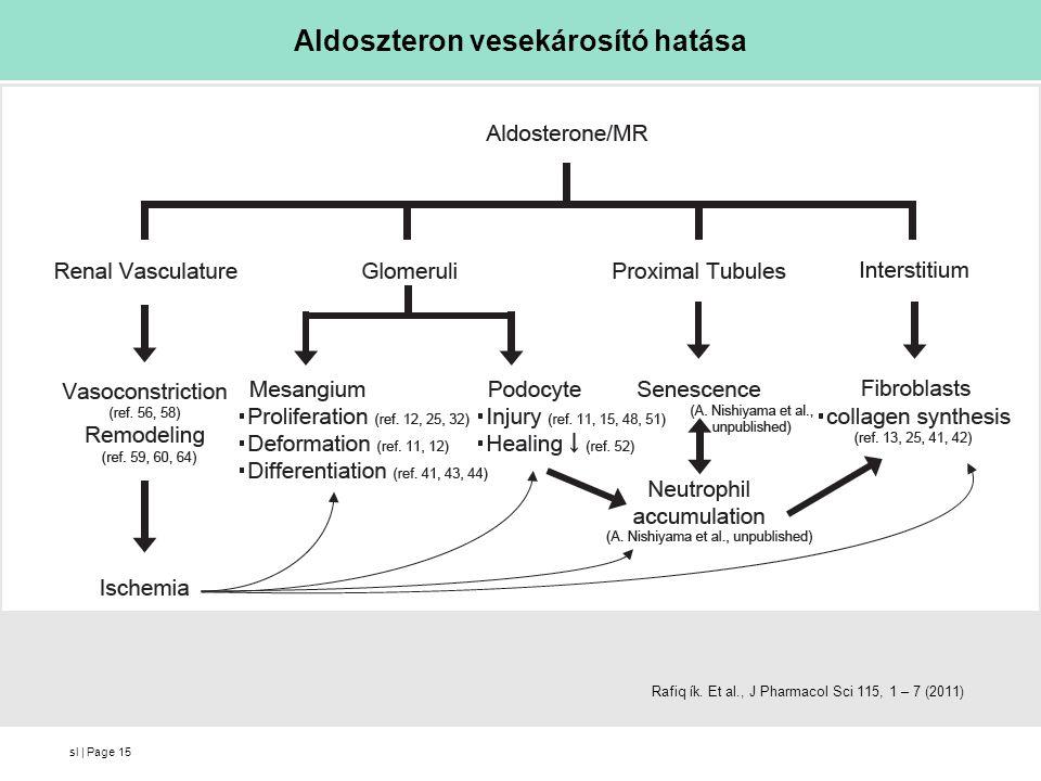 sl | Page Aldoszteron vesekárosító hatása 15 Rafiq ík. Et al., J Pharmacol Sci 115, 1 – 7 (2011)