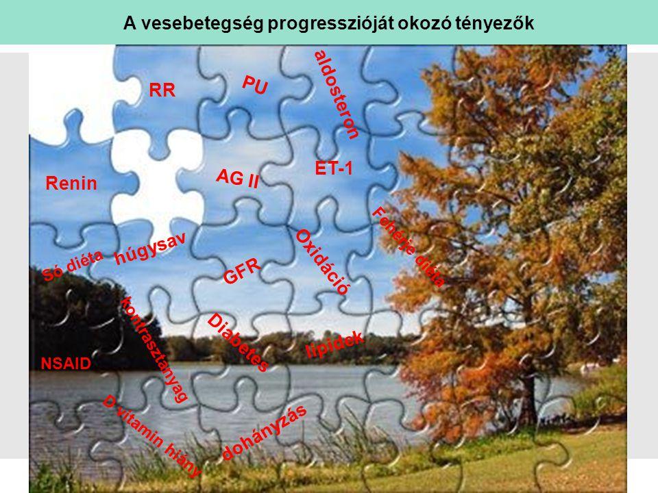 sl   Page Húgysav kiváltotta káros hatások Adapted from Johnson; Hypertension.