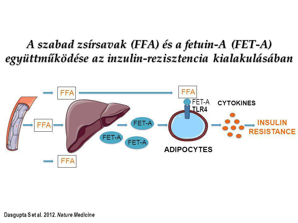 FFA FET-A FFA TLR4 FET-A CYTOKINES ADIPOCYTES INSULIN RESISTANCE Dasgupta S et al. 2012. Nature Medicine A szabad zsírsavak (FFA) és a fetuin-A (FET-A
