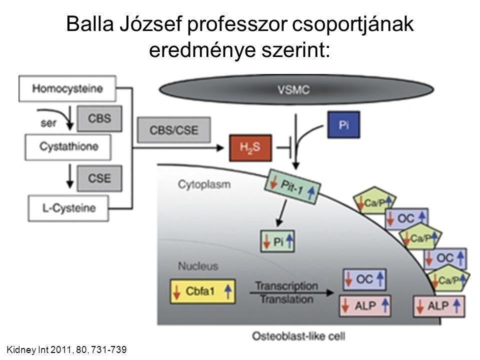 Balla József professzor csoportjának eredménye szerint: Kidney Int 2011, 80, 731-739