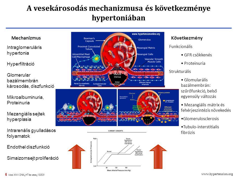 6 kissi XVIII DNN_HT és vese_130531 A vesekárosodás mechanizmusa és következménye hypertoniában Vérnyomás Intraglomeruláris hypertonia Hyperfiltráció