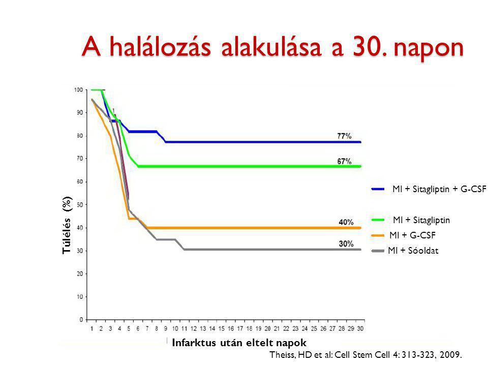 A halálozás alakulása a 30. napon Theiss, HD et al: Cell Stem Cell 4: 313-323, 2009. Túlélés (%) Infarktus után eltelt napok MI + Sóoldat MI + G-CSF M