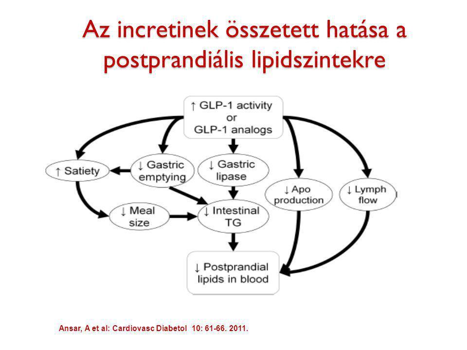 Az incretinek összetett hatása a postprandiális lipidszintekre Ansar, A et al: Cardiovasc Diabetol 10: 61-66. 2011.