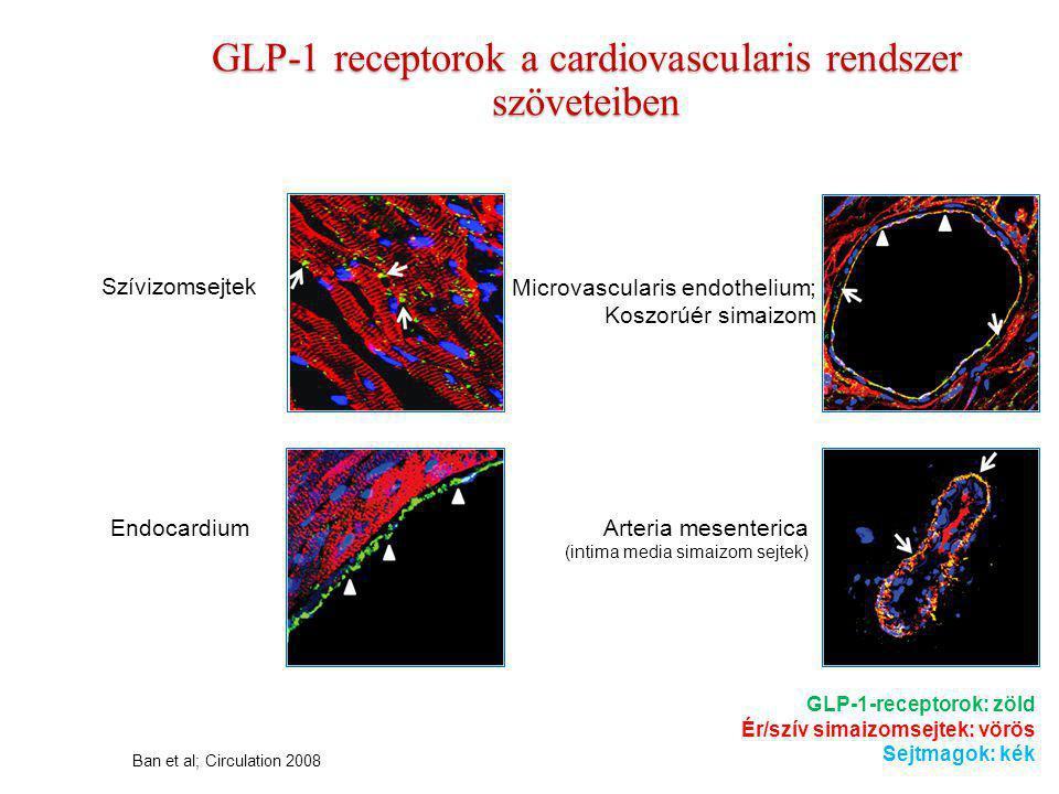 * * A GLP-1 értágító hatású és javítja az endothel funkciót Basu, et al : AJP 2007 Egészséges egyének 25 20 15 10 5 0 0 2 4 6 8 Áramlás /ml/100 ml/perc) Acetilkolin infúzió (μg/100 ml/min) GLP-1 előtt GLP-1 után (1.2 pmol/kg/perc) FMD (%) változása a kiindulási értékről Kontroll (sóoldat) GLP-1 (2 pmol/kg/min) 0 1 2 3 5 6 7 4 FMD = Flow-mediálta vasodilatatio Nystrom, et al: Am J Physiol Endocrinol Metab 2004 2-es típusú cukorbetegek (stabil szívkoszorúér-betegséggel) Alkar vasodilatatio