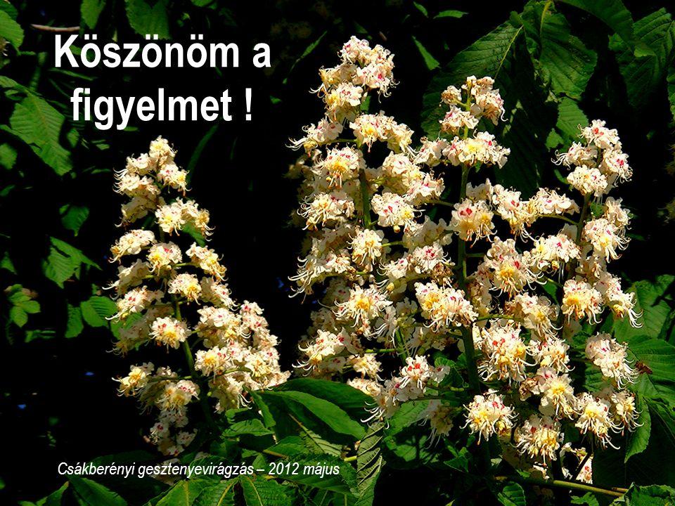 22 Köszönöm a figyelmet ! Csákberényi gesztenyevirágzás – 2012 május