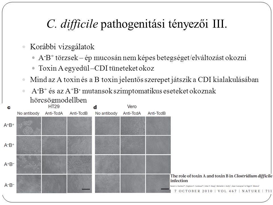 C. difficile pathogenitási tényezői III. Korábbi vizsgálatok A - B + törzsek – ép mucosán nem képes betegséget/elváltozást okozni Toxin A egyedül –CDI