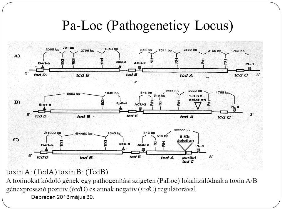 Pa-Loc (Pathogeneticy Locus) Debrecen 2013 május 30. toxin A: (TcdA) toxin B: (TcdB) A toxinokat kódoló gének egy pathogenitási szigeten (PaLoc) lokal