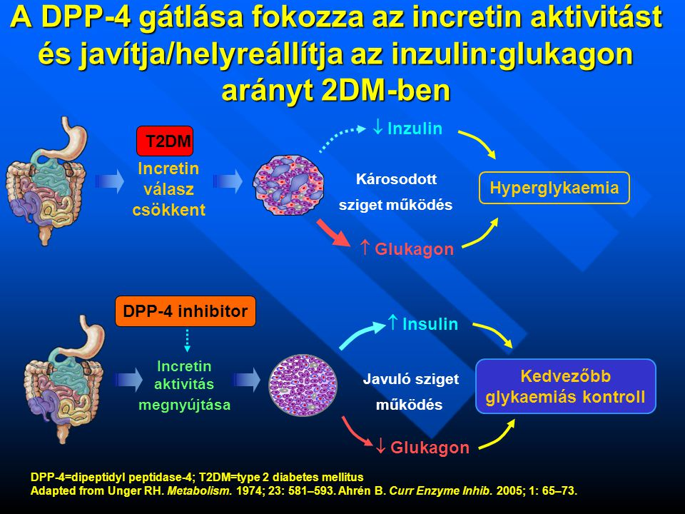 DPP-4=dipeptidyl peptidase-4; T2DM=type 2 diabetes mellitus Adapted from Unger RH. Metabolism. 1974; 23: 581–593. Ahrén B. Curr Enzyme Inhib. 2005; 1: