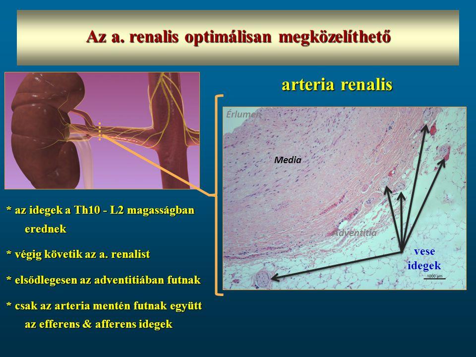 * az idegek a Th10 - L2 magasságban erednek * végig követik az a. renalist * elsődlegesen az adventitiában futnak * csak az arteria mentén futnak együ