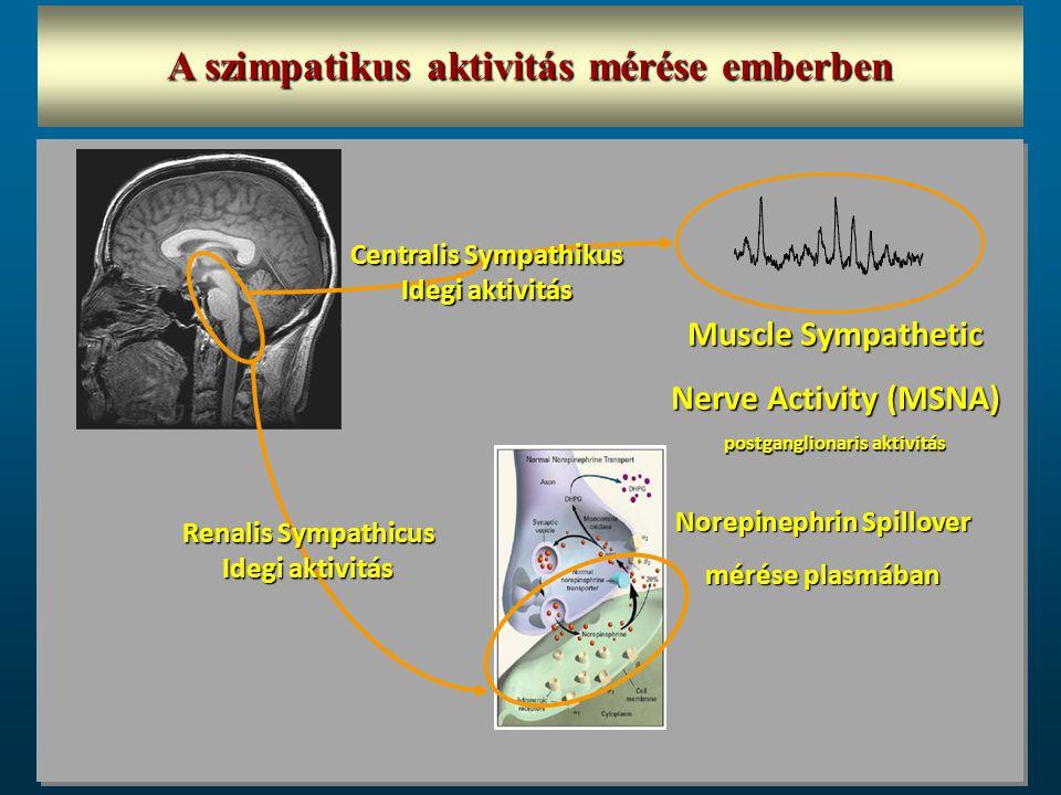 Norepinephrin Spillover mérése plasmában Muscle Sympathetic Nerve Activity (MSNA) postganglionaris aktivitás Centralis Sympathikus Idegi aktivitás Ren