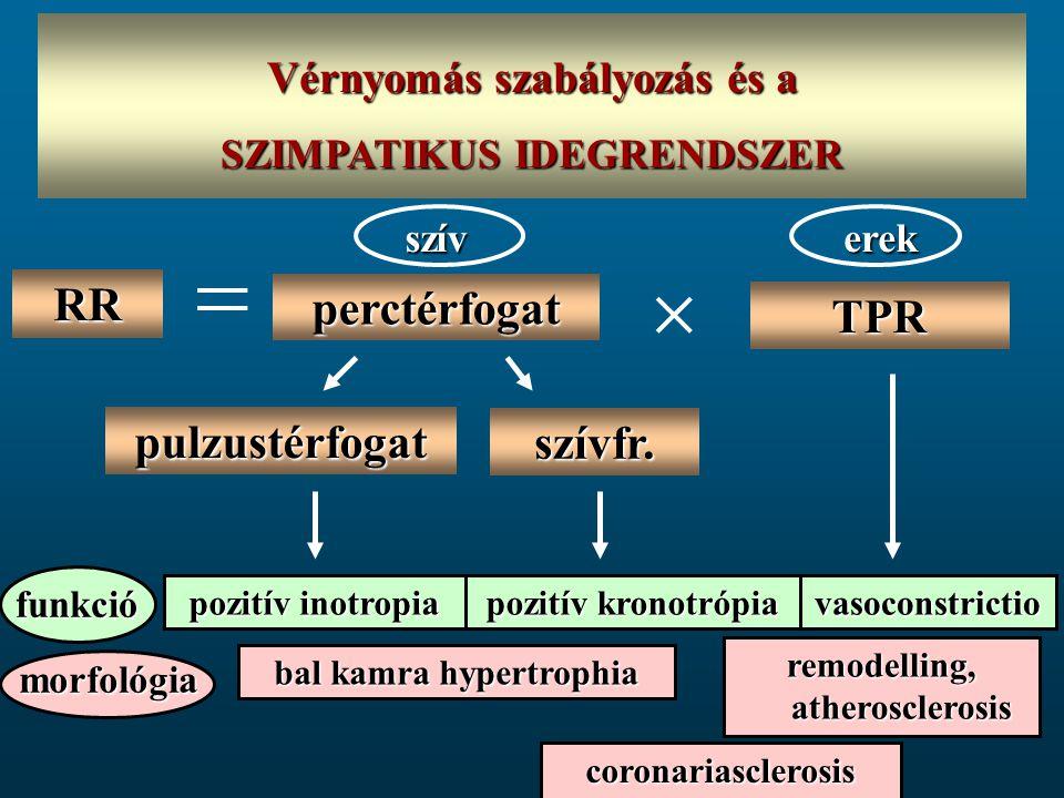 Megnövekedett szimpatikus idegrendszeri aktivitás A megnövekedett szimpatikus idegrendszeri aktivitás számos patofiziológiai CVS és metabolikus változást eredményez - megnövekedett vascularis tónus és rezisztencia, hypertonia - szív és vascularis simaizom remodelling - renalis vasoconstrictio, RAAS-rendszer aktivációja - oxidatív stressz - oxidatív stressz - metabolikus abnormalitások (inzulin rezisztencia)