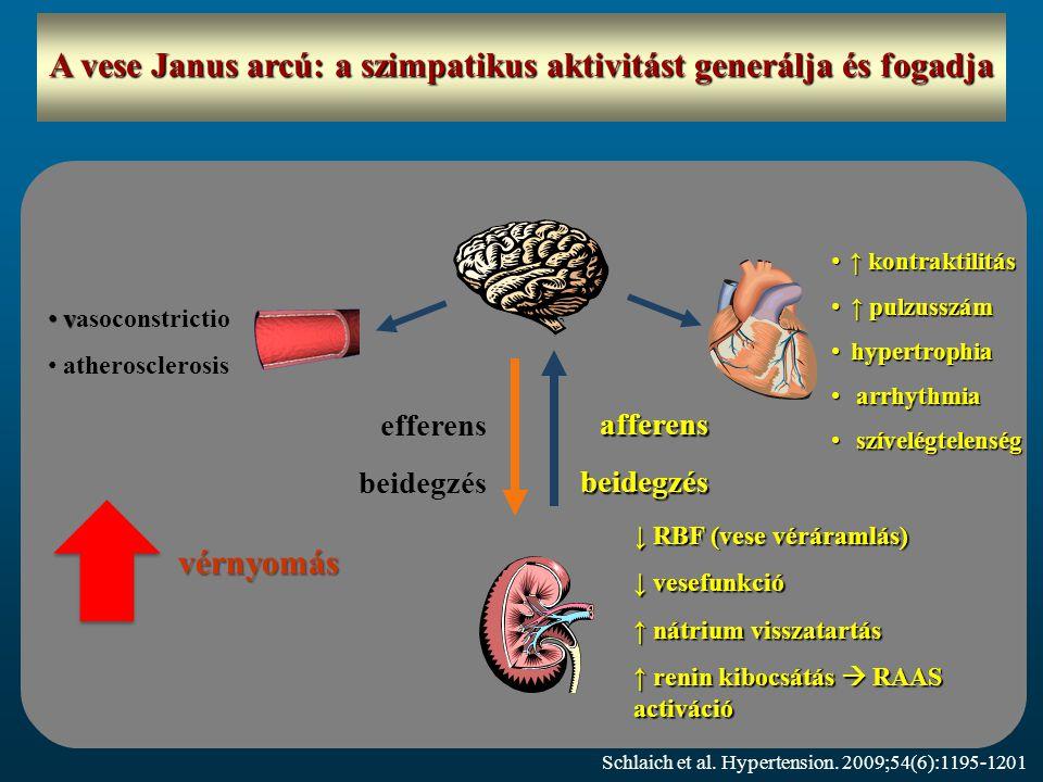 A vese Janus arcú: a szimpatikus aktivitást generálja és fogadja ↑ kontraktilitás ↑ kontraktilitás ↑ pulzusszám ↑ pulzusszám hypertrophia hypertrophia arrhythmia arrhythmia szívelégtelenség szívelégtelenség v vasoconstrictio atherosclerosis efferens beidegzés vérnyomás afferensbeidegzés ↓ RBF (vese véráramlás) ↓ vesefunkció ↑ nátrium visszatartás ↑ renin kibocsátás  RAAS activáció Schlaich et al.