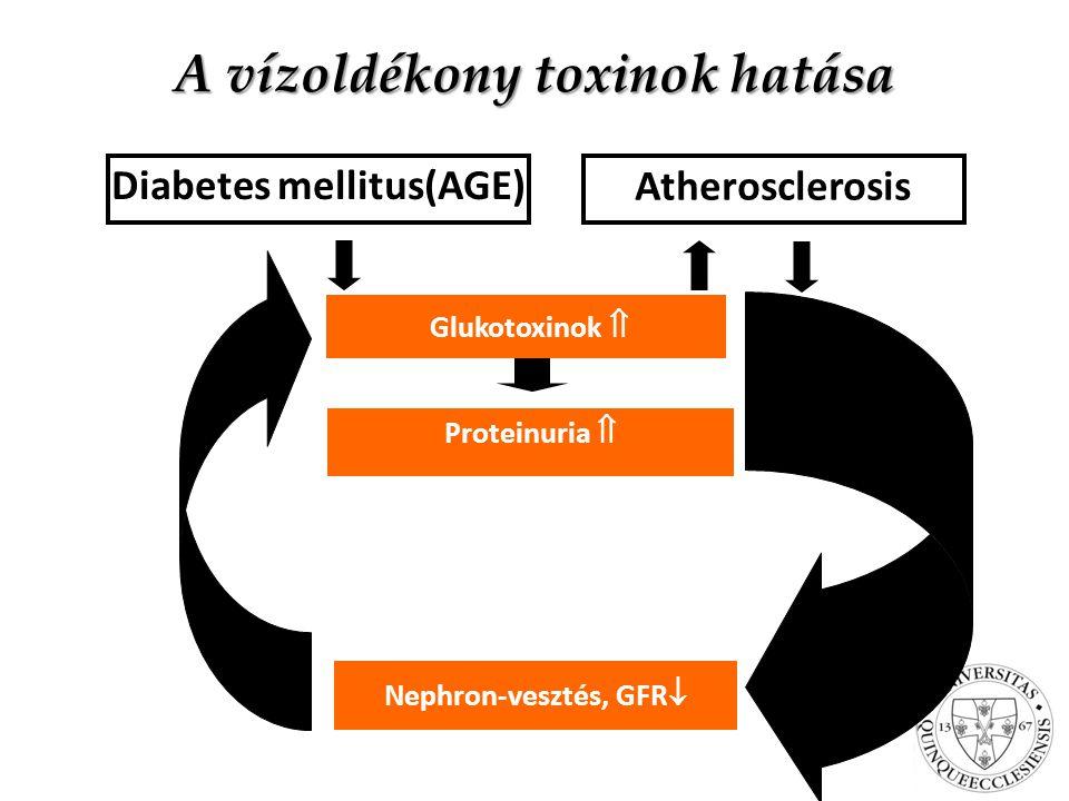 A vízoldékony toxinok hatása Nephron-vesztés, GFR  Glukotoxinok  Diabetes mellitus(AGE) Atherosclerosis Proteinuria 