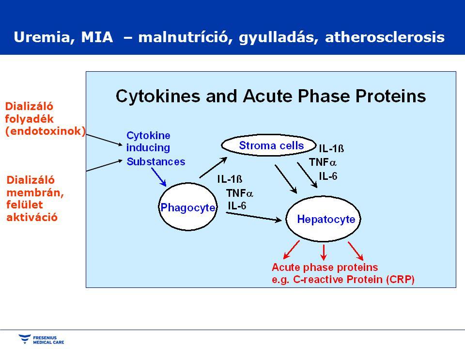 Uremia, MIA – malnutríció, gyulladás, atherosclerosis Dializáló folyadék (endotoxinok) Dializáló membrán, felület aktiváció