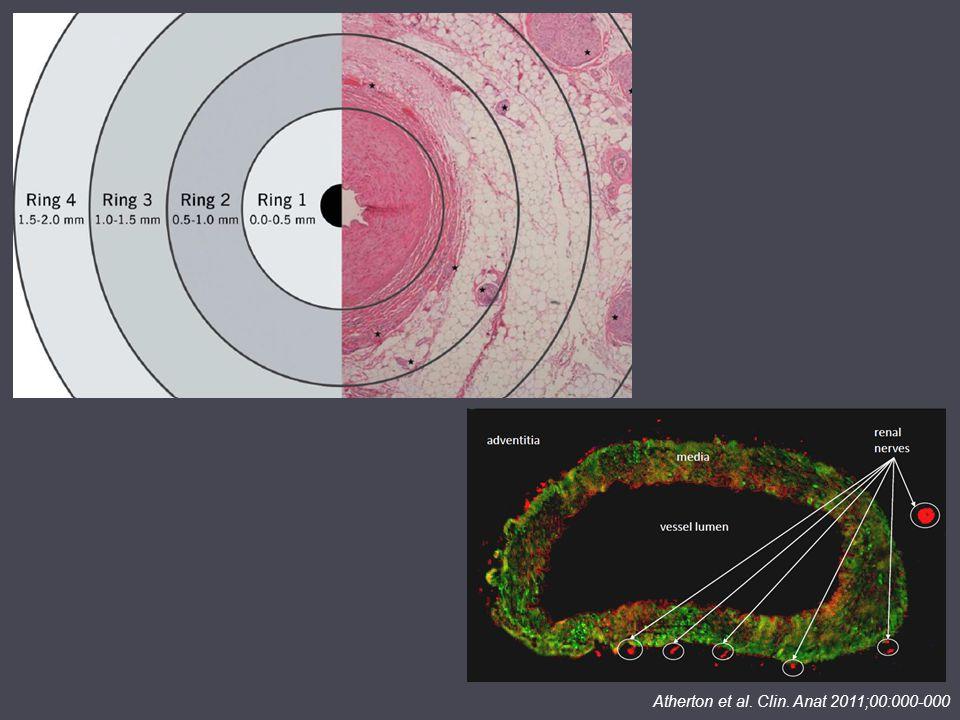 Atherton et al. Clin. Anat 2011;00:000-000
