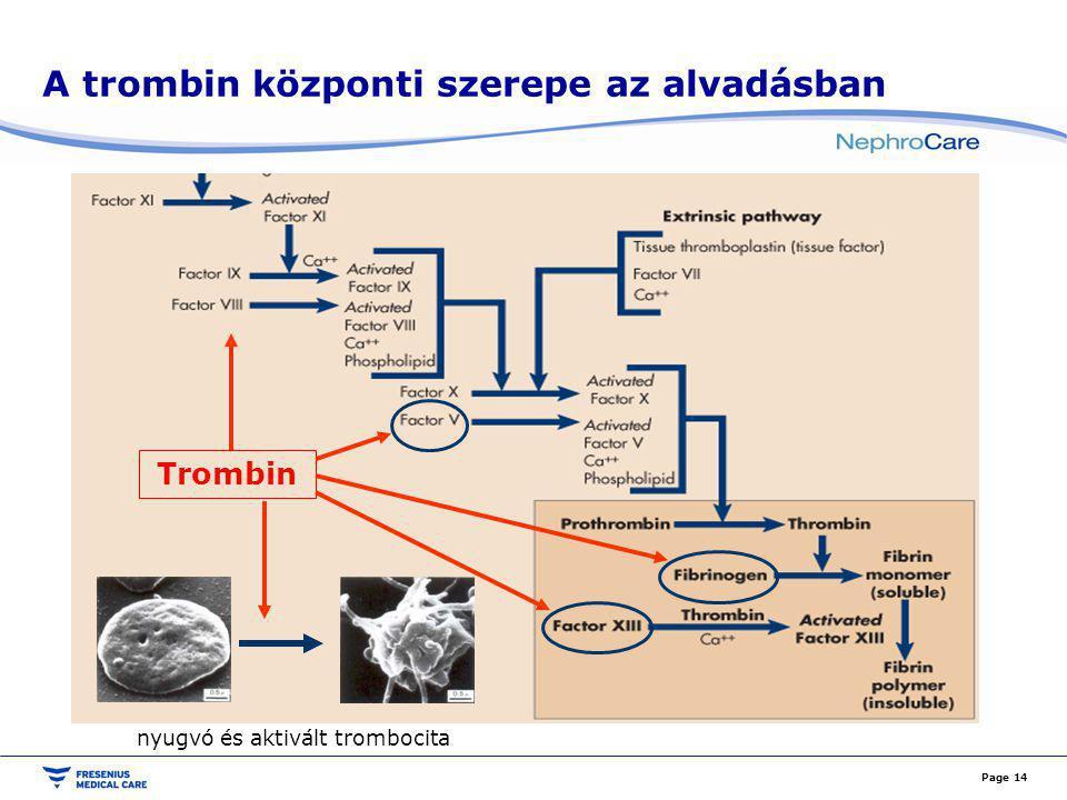A trombin központi szerepe az alvadásban Page 14 Trombin nyugvó és aktivált trombocita