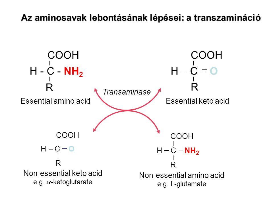 COOH R H - C - NH 2 COOH R H C O Transaminase COOH R H C O COOH R H C NH 2 Essential amino acidEssential keto acid Non-essential keto acid e.g.