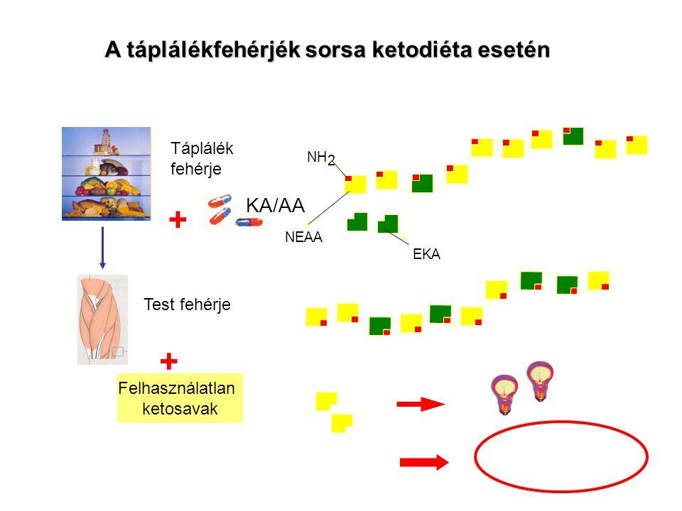 Felhasználatlan ketosavak + Táplálék fehérje Test fehérje + KA/AA NH 2 NEAA EKAEKA A táplálékfehérjék sorsa ketodiéta esetén