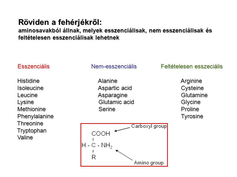Röviden a fehérjékről: aminosavakból állnak, melyek esszenciálisak, nem esszenciálisak és feltételesen esszenciálisak lehetnek Esszenciális Nem-esszenciális Feltételesen esszeciális Histidine Alanine Arginine Histidine Alanine Arginine Isoleucine Aspartic acid Cysteine Isoleucine Aspartic acid Cysteine Leucine Asparagine Glutamine Leucine Asparagine Glutamine Lysine Glutamic acid Glycine Lysine Glutamic acid Glycine Methionine Serine Proline Methionine Serine Proline Phenylalanine Tyrosine Phenylalanine Tyrosine Threonine Threonine Tryptophan Tryptophan Valine Valine