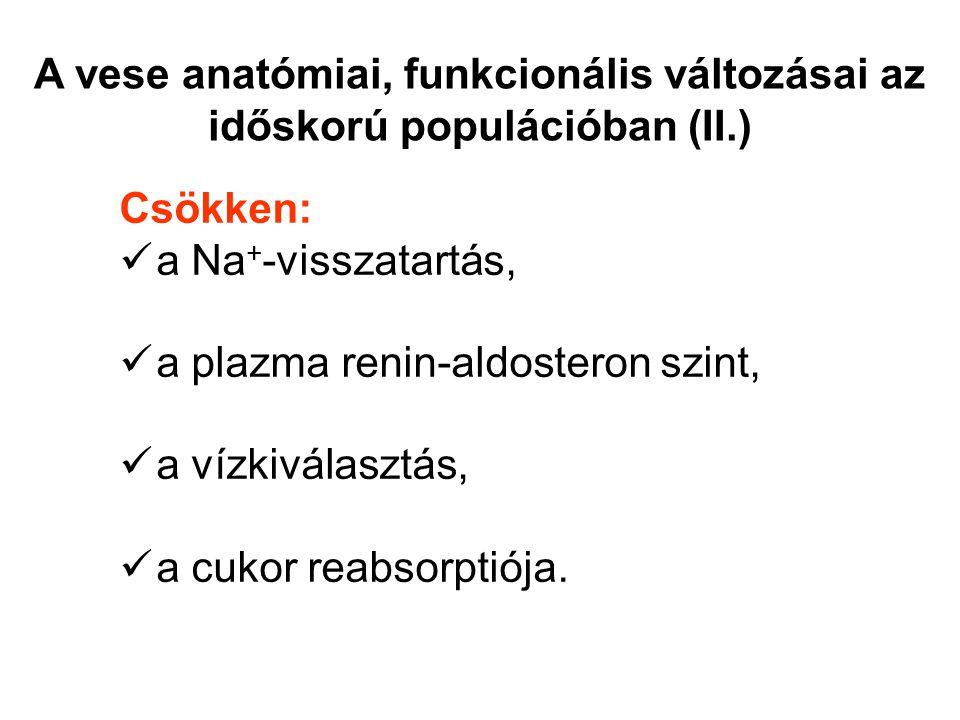 Csökken: a Na + -visszatartás, a plazma renin-aldosteron szint, a vízkiválasztás, a cukor reabsorptiója. A vese anatómiai, funkcionális változásai az