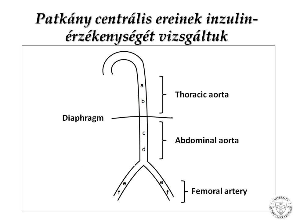 Mi a különbség az albumin-kreatinin hányados (pillanatnyi érték) és a 24-órás albuminürítés (napi átlagos érték) között.