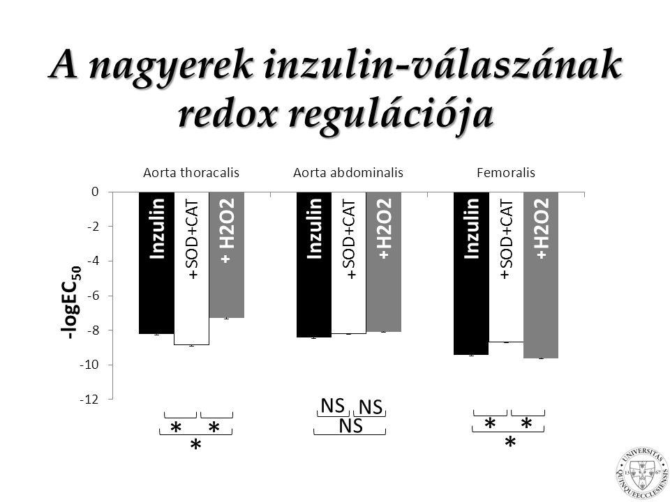 * * * * ■=SOD+Cat □=H 2 O 2 +AT A nagyerek inzulin-válaszának redox regulációja