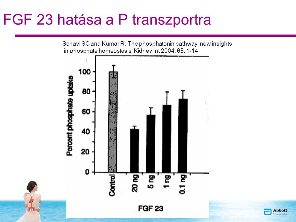 FGF 23 hatása a P transzportra Schavi SC and Kumar R: The phosphatonin pathway: new insights in phosphate homeostasis. Kidney Int 2004, 65: 1-14
