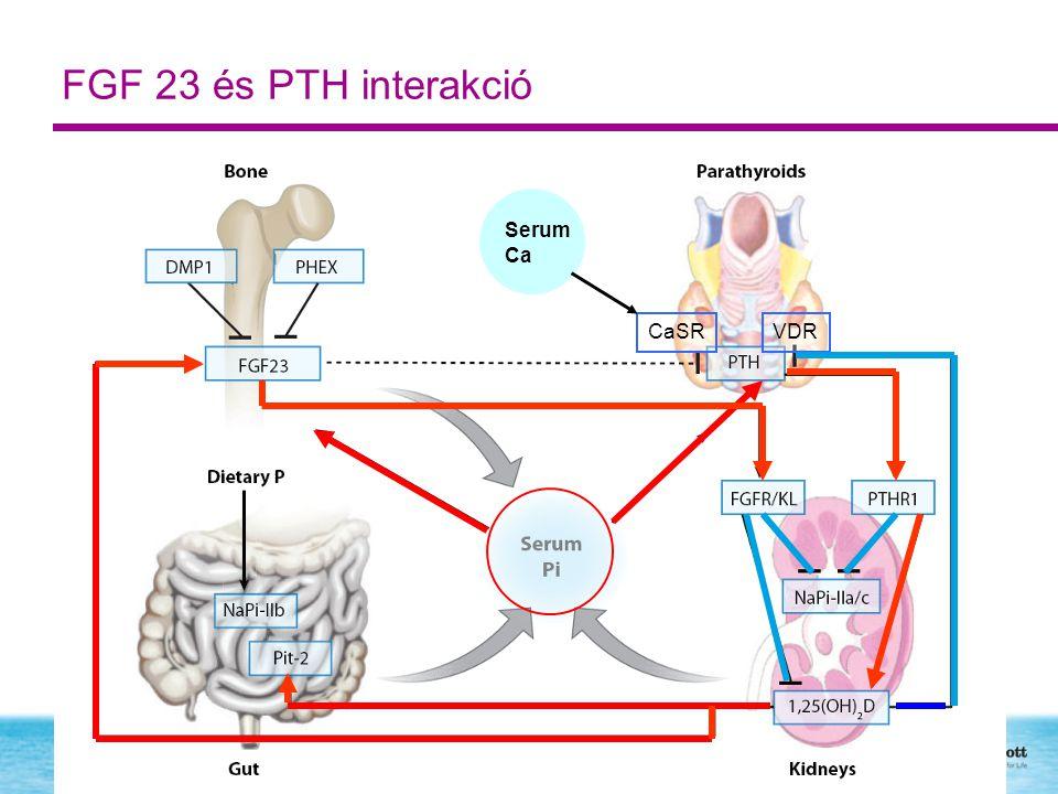FGF 23 és PTH interakció CaSR Serum Ca VDR