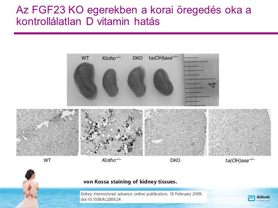 Az FGF23 KO egerekben a korai öregedés oka a kontrollálatlan D vitamin hatás