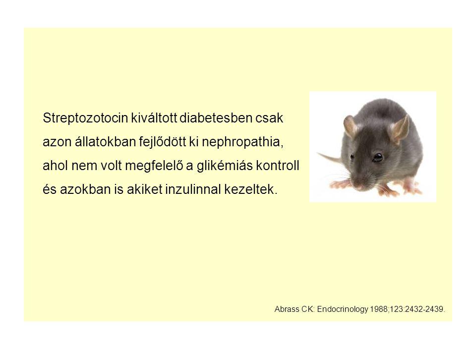 Streptozotocin kiváltott diabetesben csak azon állatokban fejlődött ki nephropathia, ahol nem volt megfelelő a glikémiás kontroll és azokban is akiket