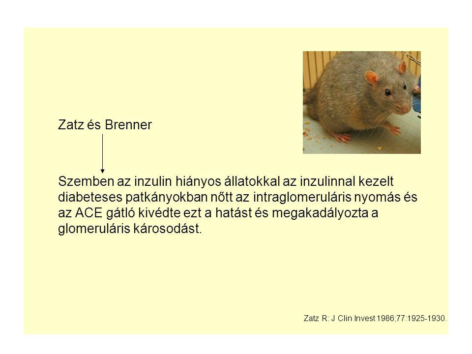 Zatz és Brenner Szemben az inzulin hiányos állatokkal az inzulinnal kezelt diabeteses patkányokban nőtt az intraglomeruláris nyomás és az ACE gátló ki